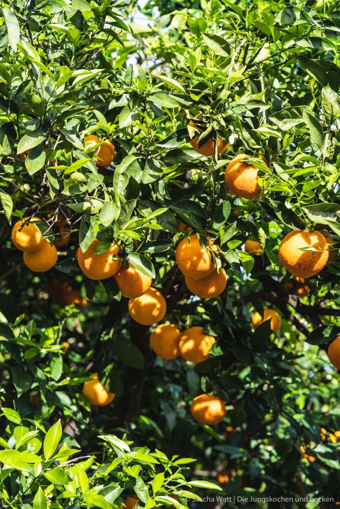 Orangen Mandelkuchen 11   Jetzt sind wir gerade erst ein paar Tage wieder aus unserem kurzen Urlaub auf Gran Canaria zurück in Köln und schon stehen wir wieder in der Küche. In diesem Fall ich alleine. Der Grund dafür ist, dass ich zu Saschas Geburtstag, der genau in unseren Urlaub fiel, natürlich auch einen Geburtstagskuchen für ihn backen musste. Oder eher gesagt, wollte. Bei der Überlegung, was es für einen Kuchen geben wird, gab es verschiedene Punkte, die ich bedenken musste. Am Ende wurde es ein Orangen-Mandelkuchen.